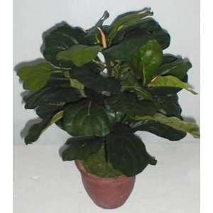 20 Fiddle Leaf Plant: Home & Kitchen