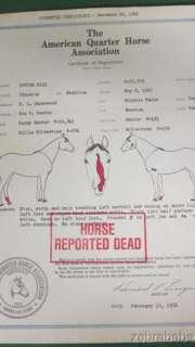 Original AQHA Registration Papers NCHA World Champion Cutting Horse