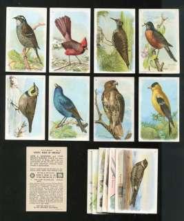 & Dwight Arm & Hammer Useful Birds of America 5th Series Card Set