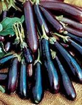 EGGPLANT LONG PURPLE ASIAN 100+ SEEDS HEIRLOOM ORIENTAL